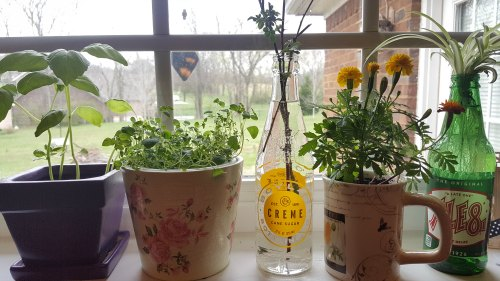 How to Make a Greenhouse Using Old Windows
