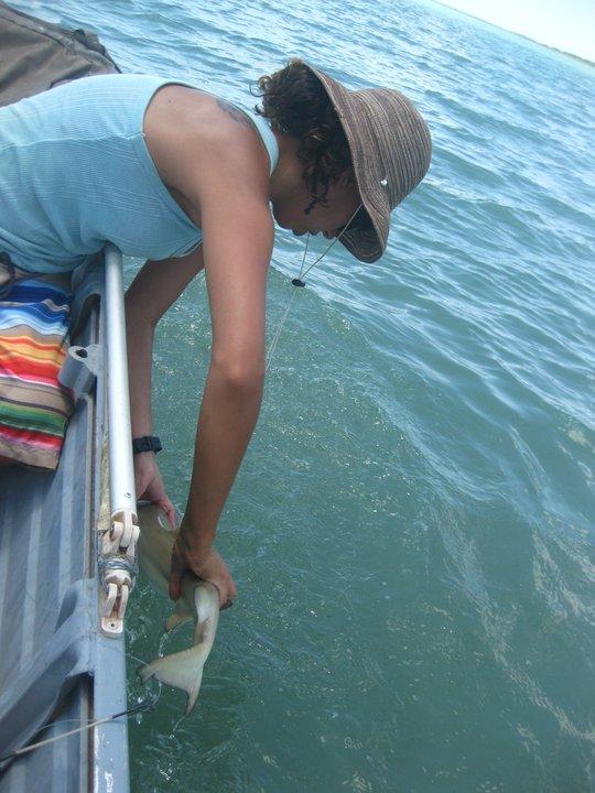 Handling little sharks