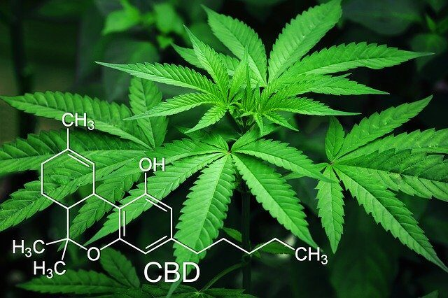 CBD chemical structure and hemp plant