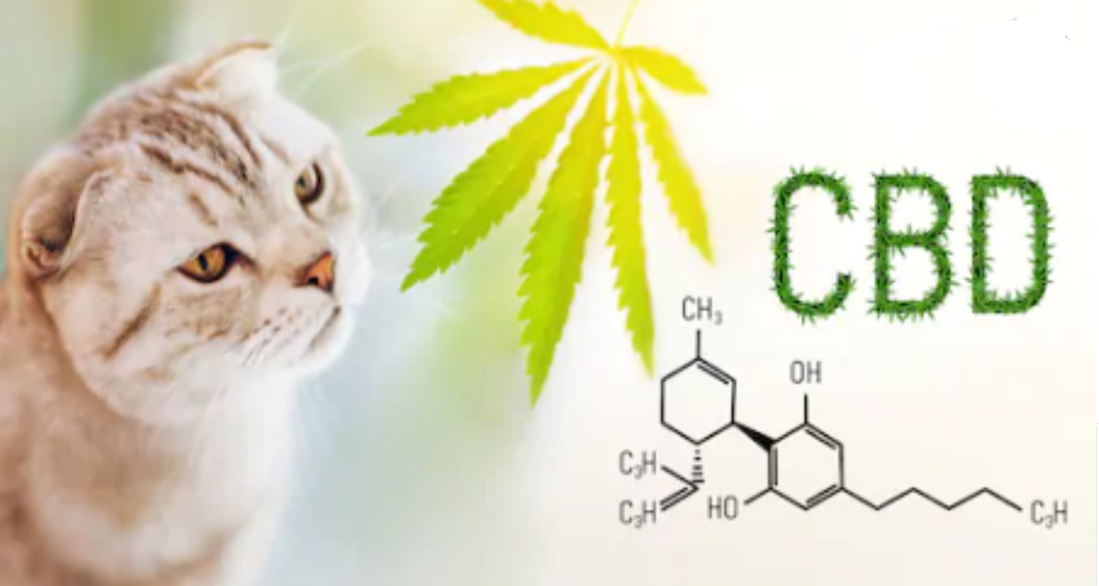 CBD Oil of Dayton Cat and CBD molecule
