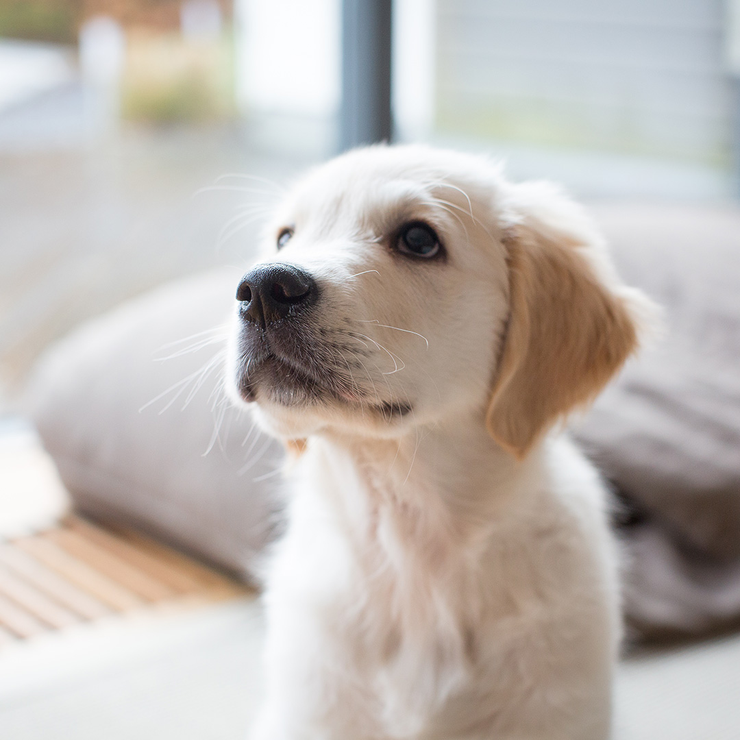 hvac tips for a new pet