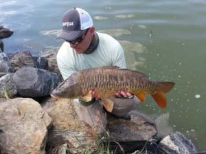 Colorado Mirror Carp