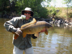 Man holding large Colorado carp while clenching fly rod in teeth