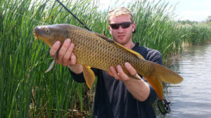 Angler holding a common carp along cattails with fly rod under arm.