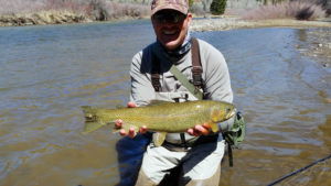 A fly fishing angler holding a golden colored rainbow trout streamside on a bright mountain day.