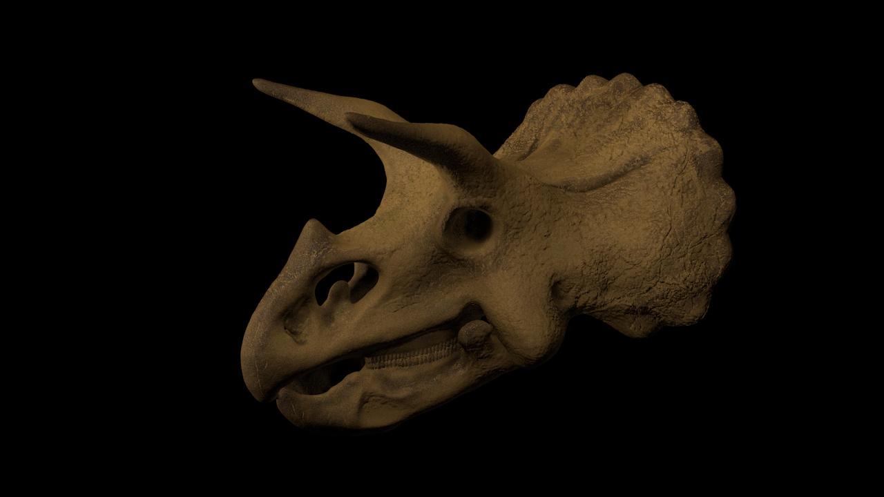TillyTriceratops