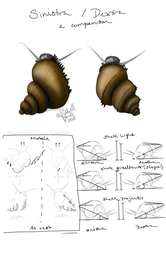 Snail Poster Layout Idea 2