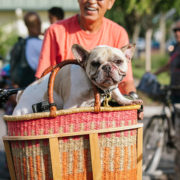 dog in bike basket