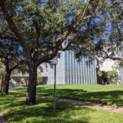 USF campus trees