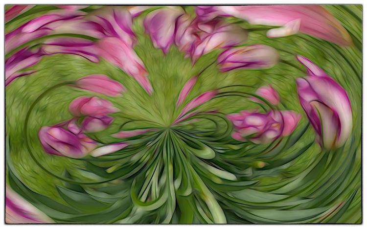 Helen Albano - Tulip Swirl - C IOM