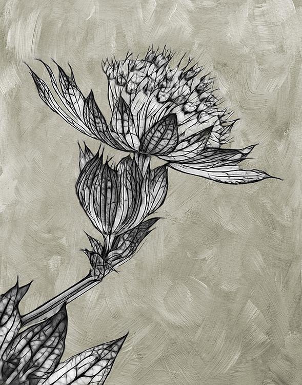 Valeire Interiligi - Etched Flower -Salon BW IOM