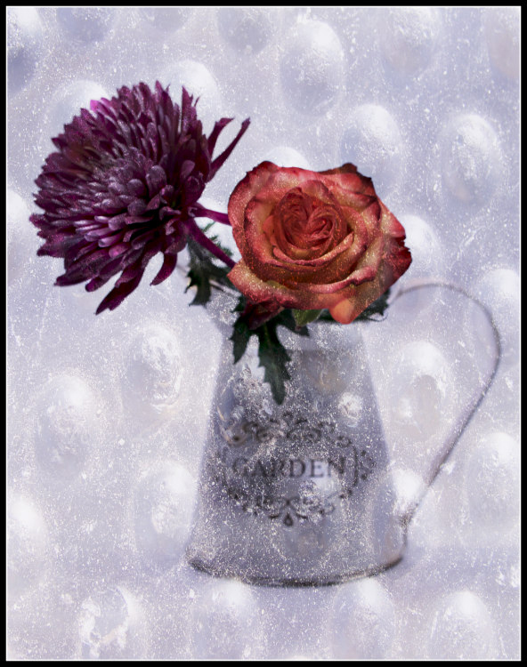 Jane Allegretti - Chilly Flowers - Creative IOM
