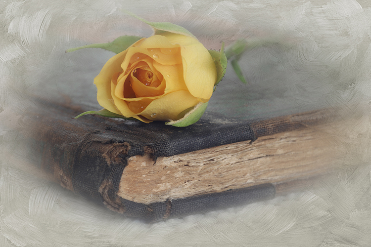 Valerie Interligi - Yellow Rose And Book - Salon IOM