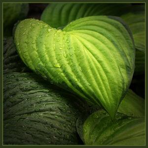 Valerie Interligi- Shades Of Green