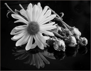 Helen-Albano-Daisy-Reflection