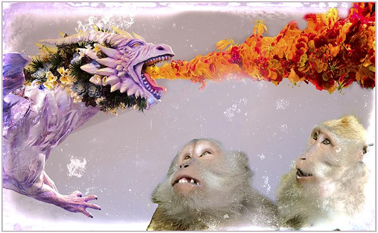 Judi Feinman - Monkeys In Awe - Creative