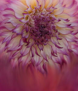 Valerie Interligi - Dahlia Mixed - Color Salon (IOM)