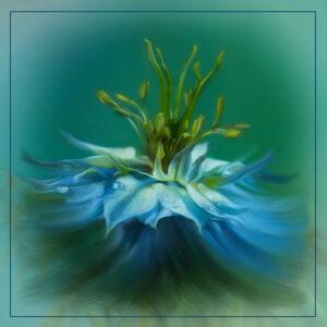 Valerie Interligi-Blue Nigella-Creative IOM