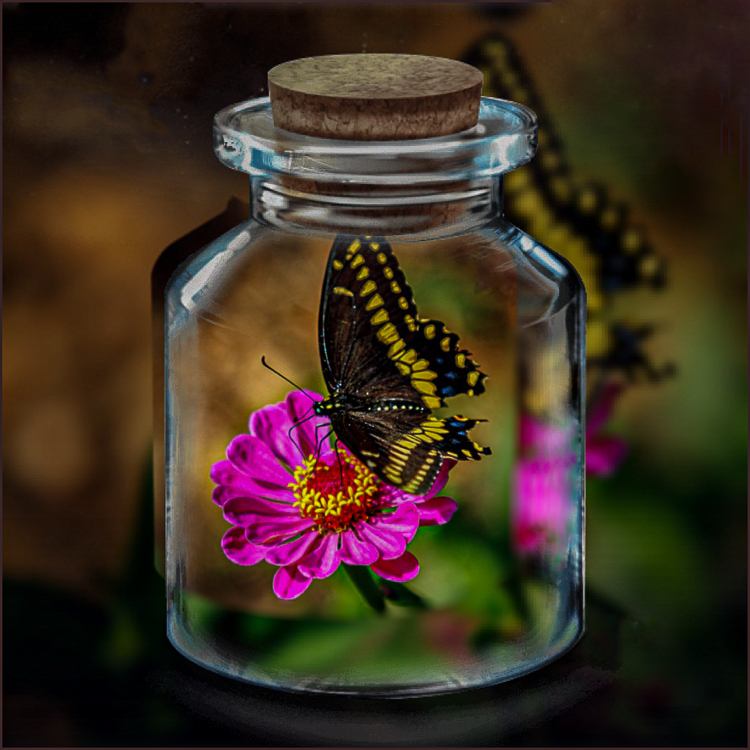 Vince Como - Butterfly In A Jar - CRE-25