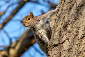 squrriel in tree