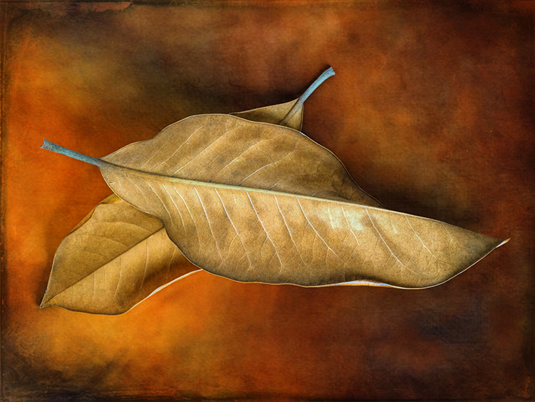 Valerie Interligi- Autumn Leaves- Color-S- 10 (IOM)