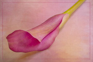 Helen Albano-Curvy Calla-Creative-10 (IOM)