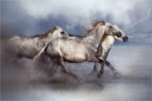 Lorraine Piskin-Color A-Dreamy White Horses-10 (IOM)