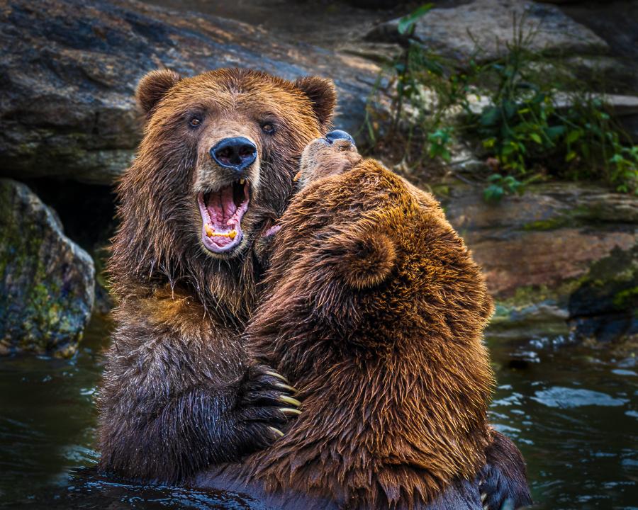 Vin Como-Color B-Bears Playing-9.5 (IOM)