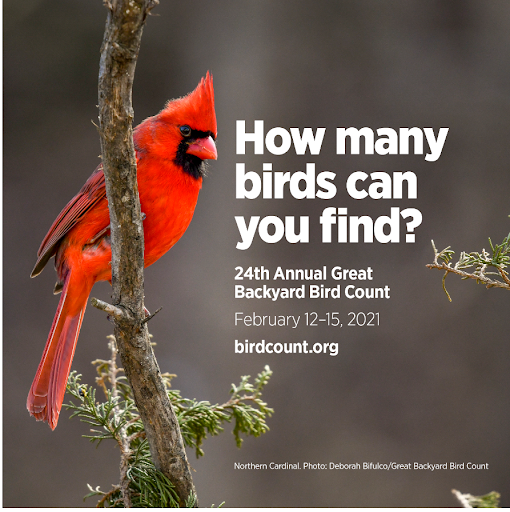 Cardinal on a branch Text: How many birds can you find?