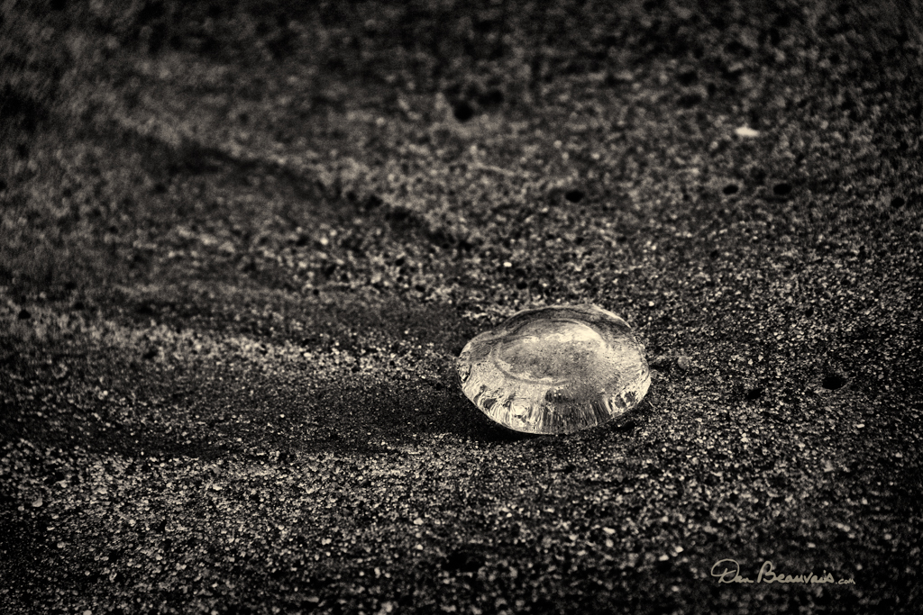 A common jellyfish in sand