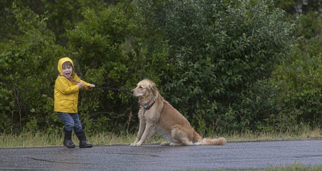 Dog walking OBX, Dog walking Outer Banks NC