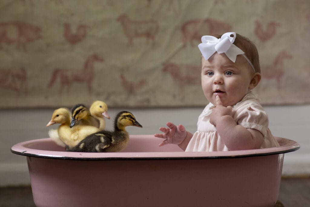 Baby girl with ducklings Loudoun County
