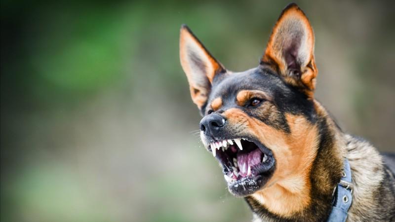 san antonio animal attack attorney