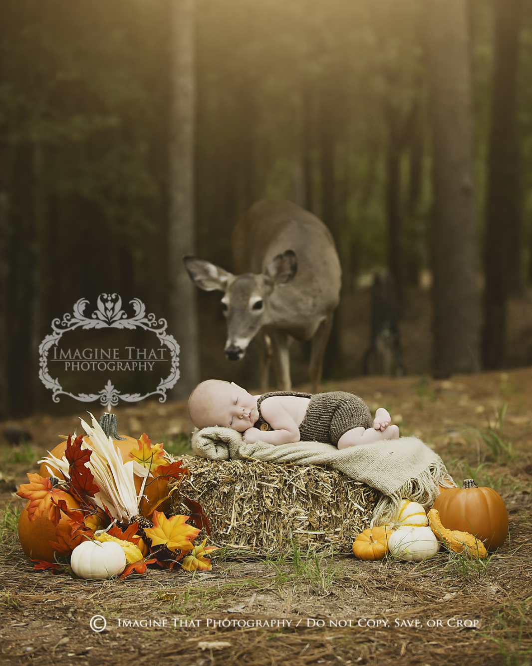 Perfect Timing: Deer Photobombs Baby Pictures in Louisiana