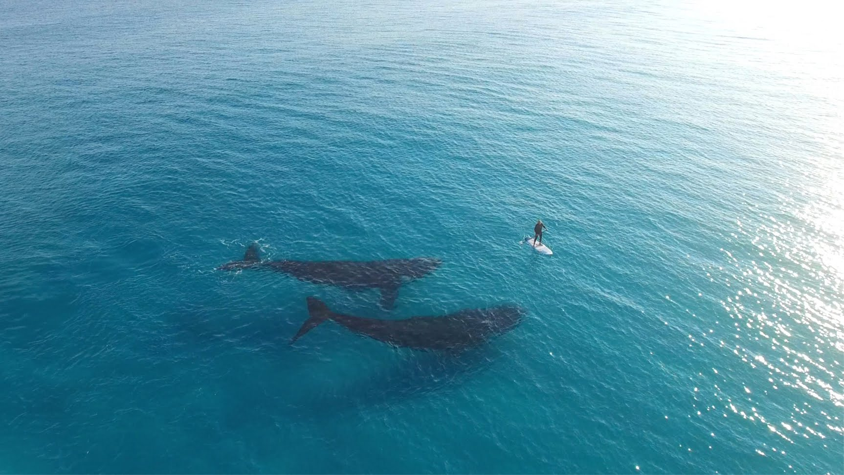 Incredible Drone Footage Shows Two Whales Swimming Alongside a Paddleboarder