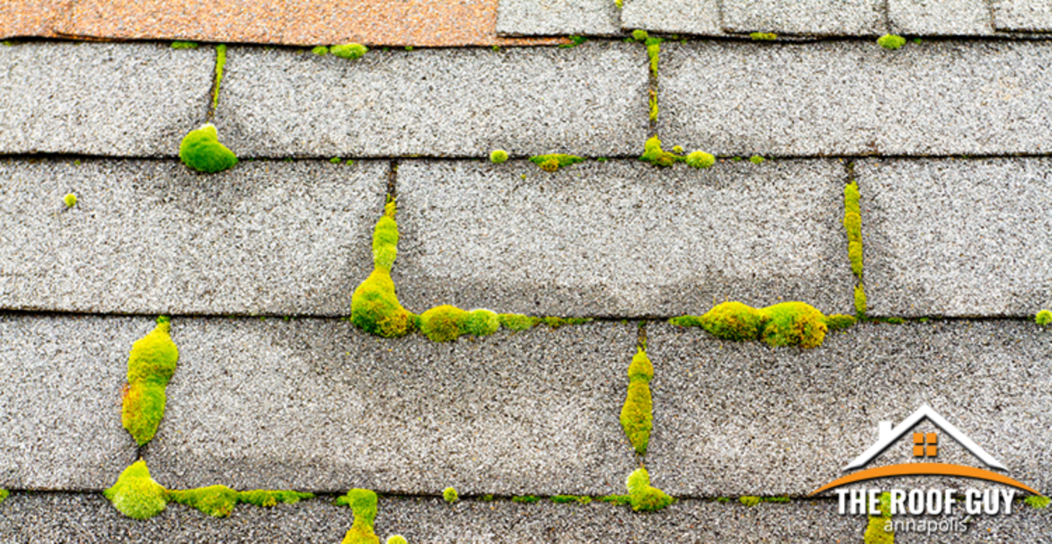 Is There Moss Growing on Your Roof ?