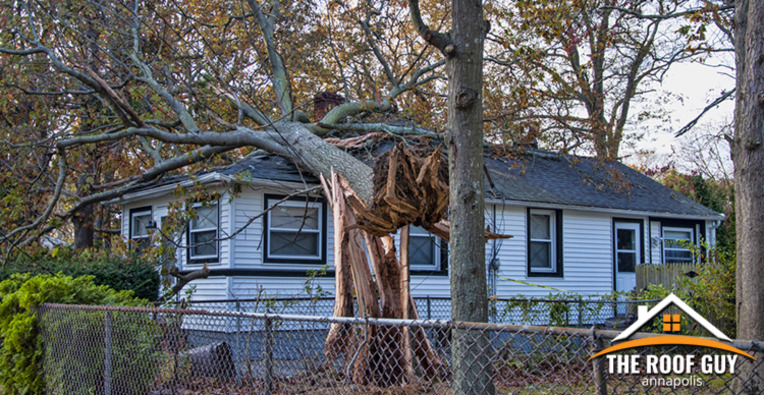 Trees That Could Damage Your Roof During a Storm
