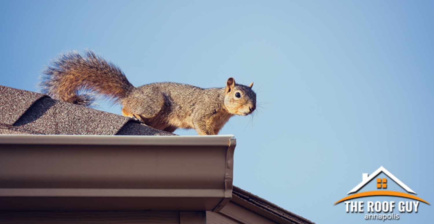 How to Avoid Critter Damage To Your Roof