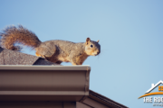 How to Avoid Critter Damage To Your Roof featured image