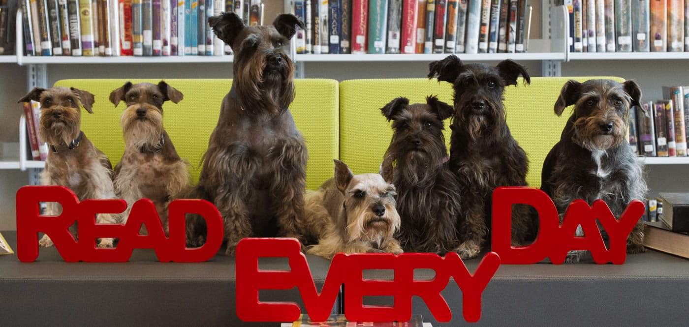 Read Everyday Dogs