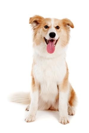 New Mexico Dog