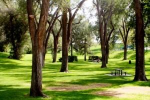Los Lunas Dog Park