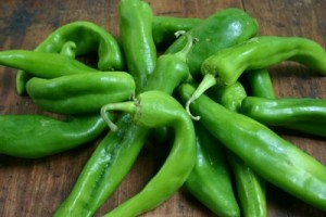 Green Chile Pet