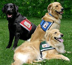 Vetco Service Dogs