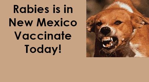 rabid dog new mexico
