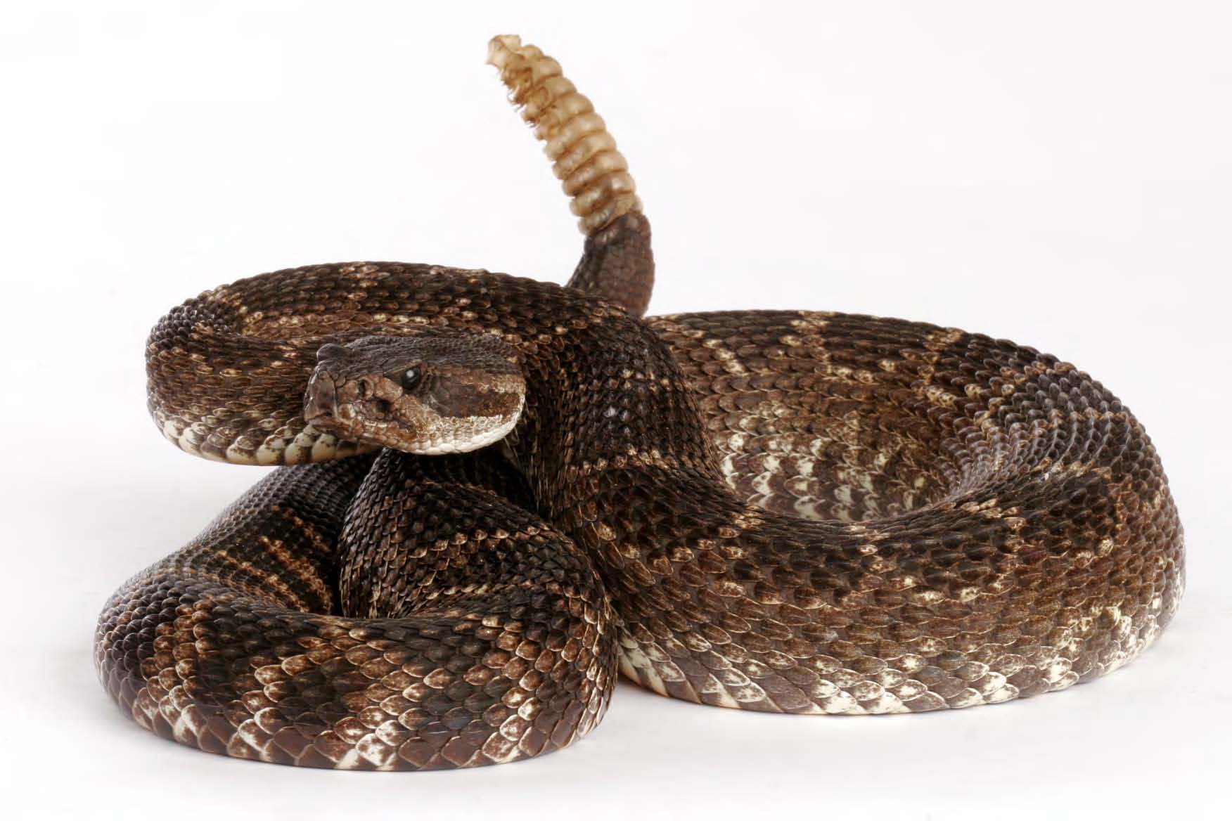 Snakes in New Mexico