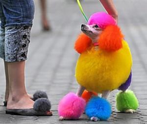 dyed-dog