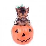 Vetco halloween