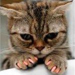 soft paws alternative to declaw
