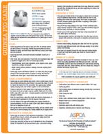 guinea-pig-pdf-thumb